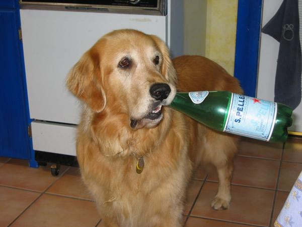 Pellegrino water bottle