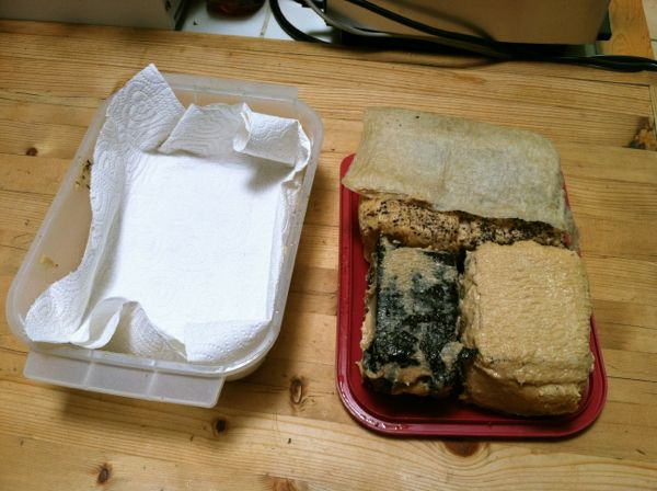 Tofu misozuke after one week, with new dry paper towels.
