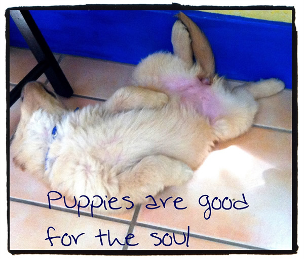 Puppies are good for the soul