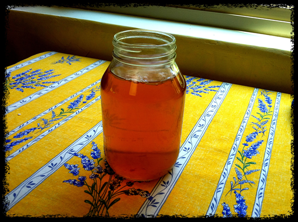 Kombucha Mother in a Jar