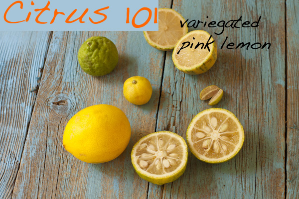 Variegated Pink Lemon