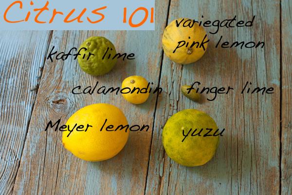 Array of unusual citrus
