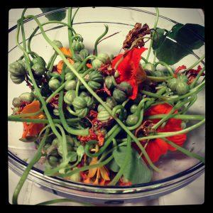 Nasturtium seeds before sorting