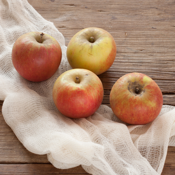 Cox's Orange Pippin Heirloom Apples | Recipe Renovator